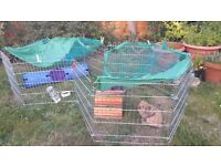 2 rabbits for sale 12 weeks old with rabbit hutch and run and all esentials needed