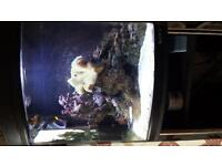 127ltr marine boyu fishtank, fish and all equipment included