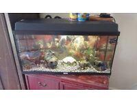 Fish tank complete setup