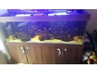 aquarium 660 litres 6x2x2 ft