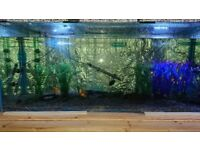 Fish tank Tank Only 5ft x2ft x18 swap or sale