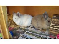 2 rabbits looking for a new home