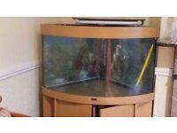 Fish aquarium for sale in Pinner