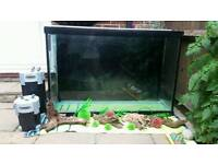 Large custom fish tank