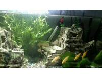 2 1/2 foot fish tank lots of extras