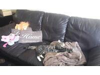 Missing! Lovely Friendly Male Tabby Cat