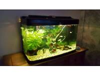 Curved / Bow Glass Tropical Fish Tank
