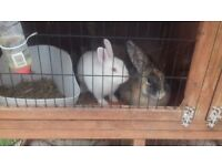 Two Rabbits and Hutch.