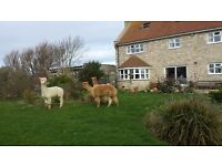 Farmhouse in 35 acres on the Jurassic Coast in Dorset between Weymouth & Portland. Sleeps 12 guests