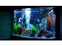 350 litre fish tank full set up Inc fish.