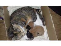 Litter of 4 kittens