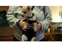 DOGGY POUCH CARRIET