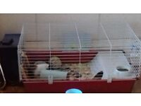 2 male guniea pigs with hutch and play pen oy had about 5 weeks from pets at home.