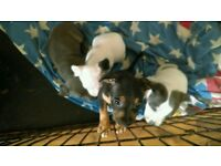 Stuffy puppy's for sale