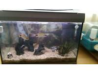 Fish tank complete setup with fish