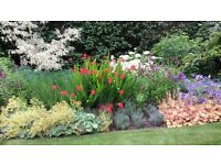 Maintenance Gardener Required, mainly S W London, 3 to 4 days per week