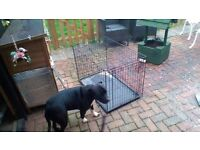 2 dog cages little bit of rust but still does the job wanting £7.00 each no offers