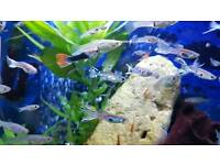 Tropical guppies... 10 for £10