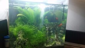 55l fish tank with 5 fish and all equipment including stand