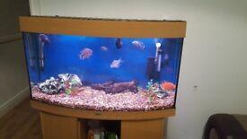 Jewel bowed front fishtank