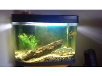 Very good condition Fishtank Panorama 40 L with accessories and fishesh