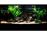 Juwel Rio 180 fish tank with full setup