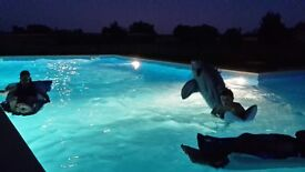 Charente Maritime - Beautiful gite business and farmhouse with stunning pool