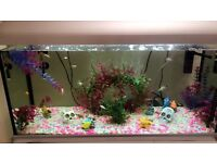 All mixed fish and everything for sale in tank