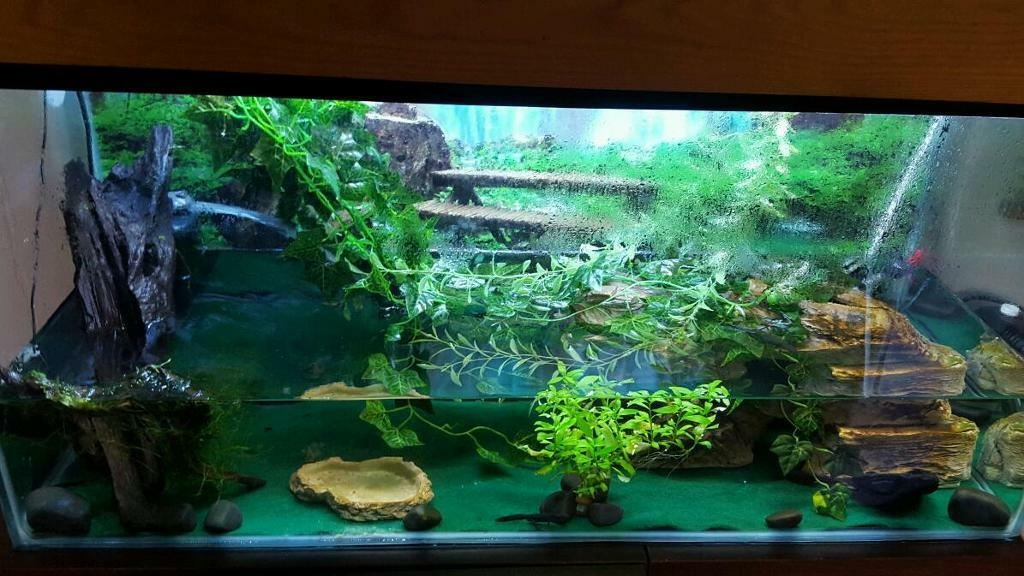 Large chinese fire bellied newt aquarium fish tank in for Fish tank fireplace