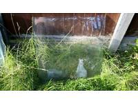 Used Greenhouse glass