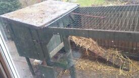Chicken coop & 2 hens & 2 roosters