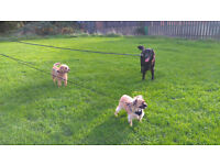 Dog daycare at eat sleep play home dog boarding £12 for upto 12 hours includes a walk