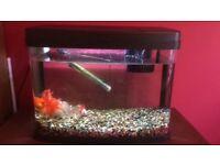 40ltr tank and 4 goldfish
