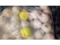 43 nxt titleist golf balls