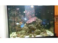 Aqua one foe sale including fish
