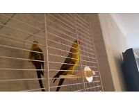 2 rock pebble parakeets and cage
