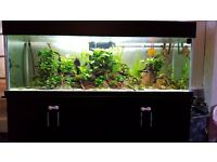 Tropical(marine) 6ft 6x2x2 fish tank with sump 600l
