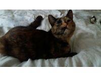 Missing tortoiseshell cat from Crayford, Kent