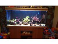 5ft fish tank full set up