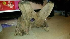 Massive wood for aquarium over 10kilos looks fantastic in tank
