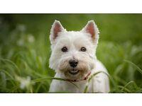Dog Walker / Pet Visiting / Pet Sitter