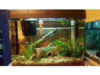 tropical fish tank with fish lights heater