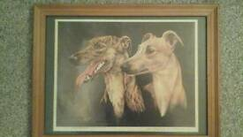 Greyhound Print by Vic Granger Limited Addition a pair of Brindles