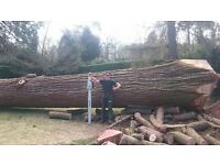Millers Tree Solutions