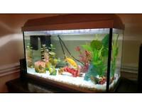 Fish Tank complete with 2 goldfish and accessories