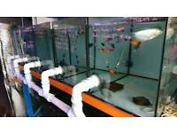 Fish Tanks And Sump System for sale