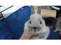 Baby rabbit ready now