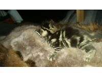 5 little kittens need new home