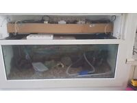 2 Fish tanks for sale with loads of equipment