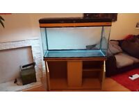 300l Fish tank and Cabinet for sale, Northampton, £190 ono **Good Condition - Must go**